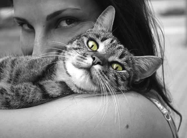 tulení s kočkou
