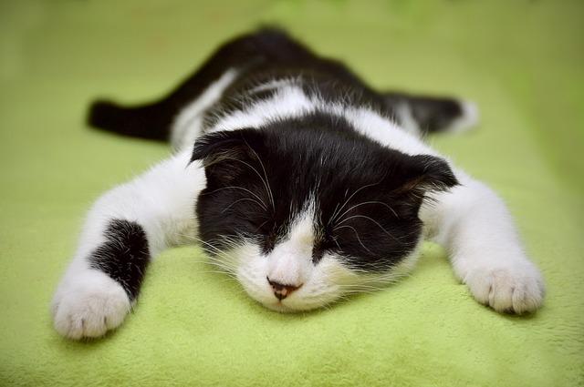 spánek kočky na břiše